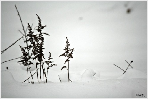 winter astilbe