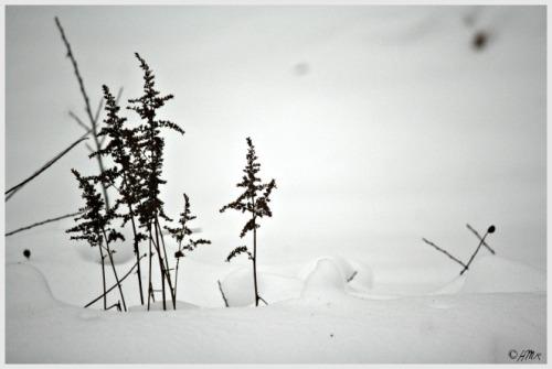 winter astilbe