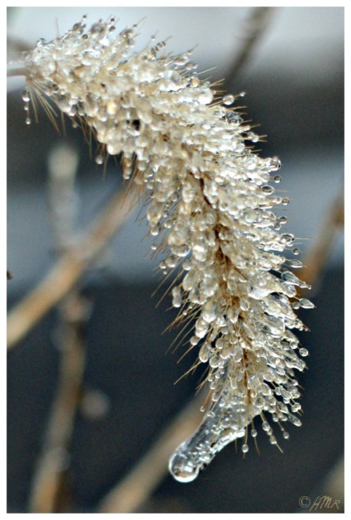 frozen grass 1