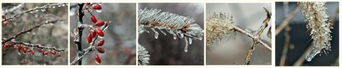 ice storm collage