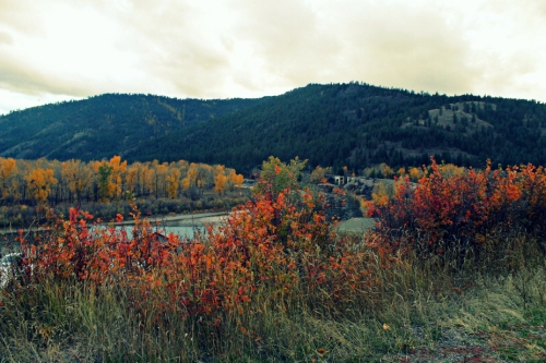 montana fall colors - ninemile