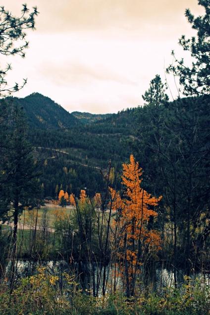 montana autumn - ninemile, alberton